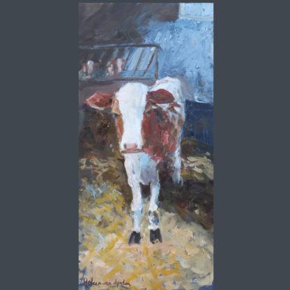Calf-in-shed, kalf in stal, heleen van Lynden